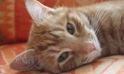Orlando the Cat