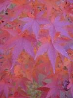Autumn awaiting