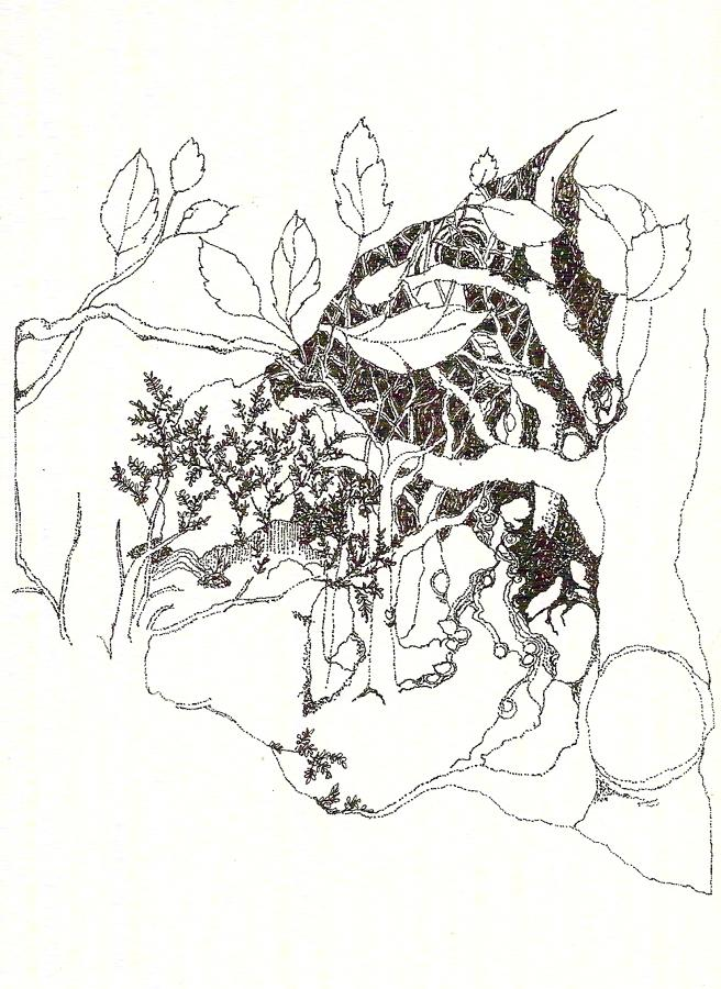 Pen & ink drawing 12  forest