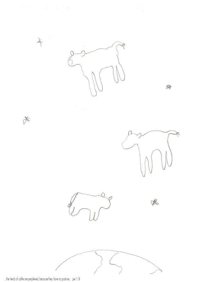 Cows perplexed